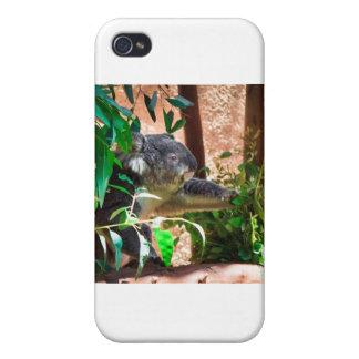 かわいいコアラ iPhone 4 ケース