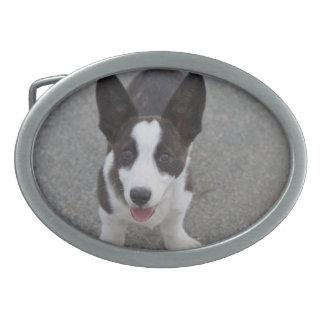 かわいいコーギーの子犬 卵形バックル