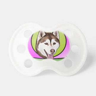 かわいいシベリアンハスキー犬 おしゃぶり