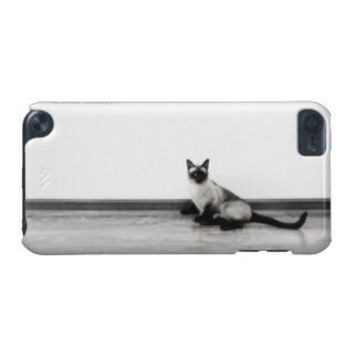 かわいいシャム猫のポートレートの写真 iPod TOUCH 5G ケース
