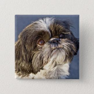 かわいいシーズー(犬)のTzuの子犬Pin 缶バッジ