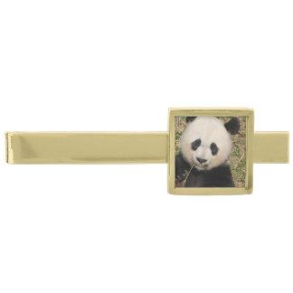 かわいいジャイアントパンダくま ゴールド タイバー