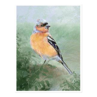 かわいいズアオアトリ、水彩画の鳥のコレクション ポストカード