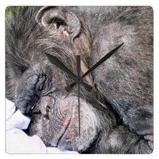 かわいいチンパンジー スクエア壁時計