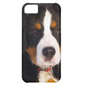かわいいバーニーズ・マウンテン・ドッグの子犬の写真 iPhone5Cケース