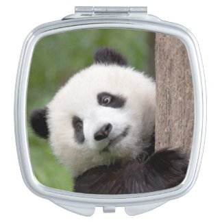 かわいいパンダの幼いこども