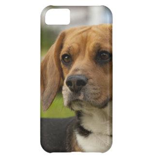 かわいいビーグル犬の小犬 iPhone5Cケース