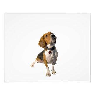 かわいいビーグル犬犬 フォトプリント