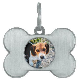 かわいいビーグル犬 ペットネームタグ