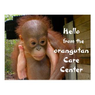 かわいいベビーのオランウータンの孤児 ポストカード