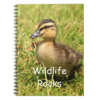 かわいいベビーの子ガモのノート ノートブック