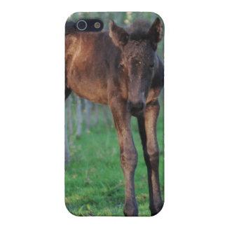 かわいいベビーの子馬 iPhone 5 カバー