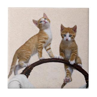 かわいいベビー猫の子ネコのおもしろいな遊ぶ体育館の写真- タイル