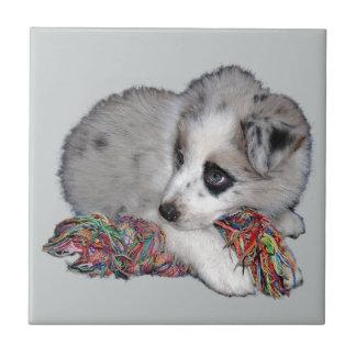 かわいいボーダーコリーの子犬 タイル