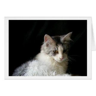 かわいいメインのあらいぐまの子ネコのメッセージカード グリーティングカード