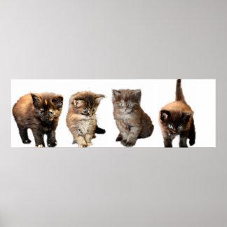 かわいいメインのあらいぐまの子ネコ ポスター