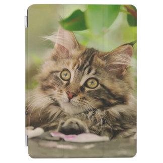 かわいいメインのあらいぐまの子ネコ iPad AIR カバー