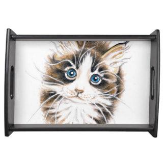 かわいいメインのあらいぐまの子猫 トレー