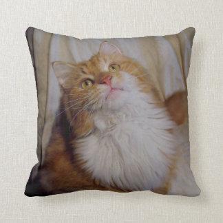 かわいいメインのあらいぐま猫の枕 クッション