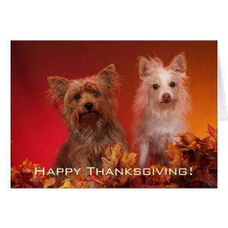 かわいいヨークシャーテリアの感謝祭の挨拶状 カード
