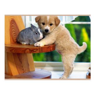 かわいい動物 ポストカード