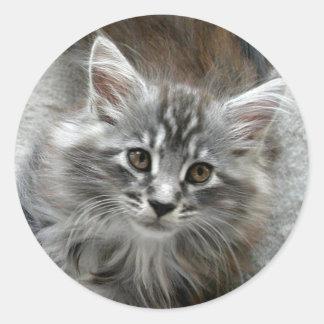 かわいい子ネコのステッカー ラウンドシール