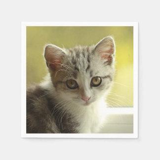 かわいい子ネコのポートレート スタンダードカクテルナプキン