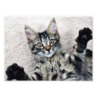 かわいい子ネコの写真のプリント フォトプリント