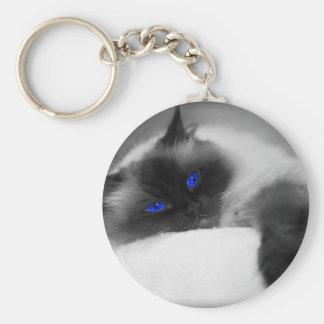かわいい子猫 キーホルダー