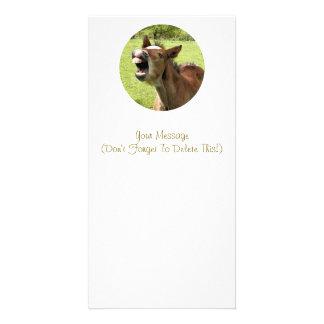 かわいい子馬 カード