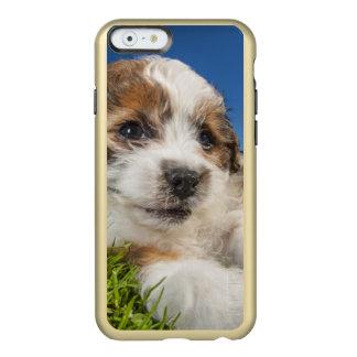 かわいい小犬(Shitzu) Incipio Feather Shine iPhone 6ケース