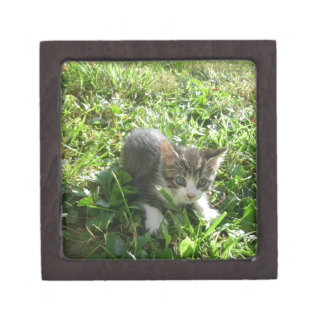 かわいい灰色の子ネコ ギフトボックス