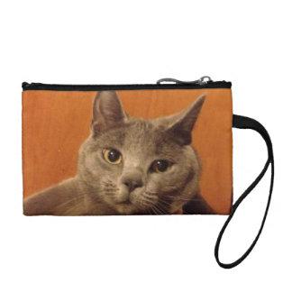 かわいい灰色の子ネコ コインパース