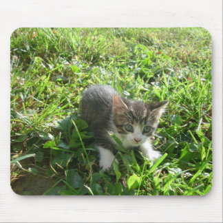 かわいい灰色の子ネコ マウスパッド