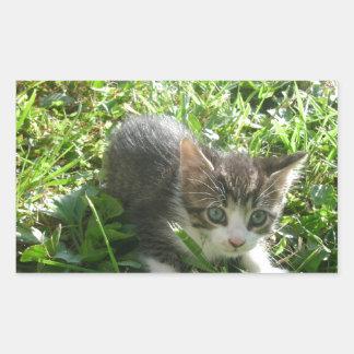 かわいい灰色の子ネコ 長方形シール