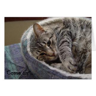 かわいい灰色猫が付いているバースデー・カード: で来られる… カード