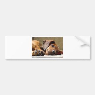 かわいい犬 バンパーステッカー