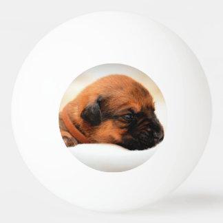 かわいい犬 卓球ボール