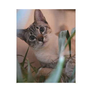 かわいい猫の写真のポートレート キャンバスプリント