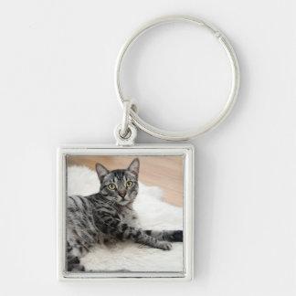 かわいい猫の提起 キーホルダー