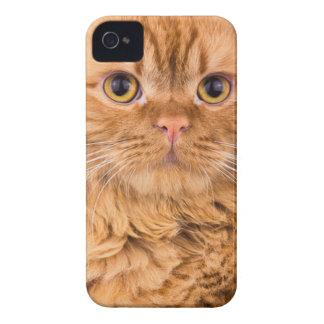 かわいい猫 Case-Mate iPhone 4 ケース