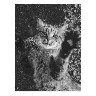 かわいい白黒猫の抱擁 ポストカード
