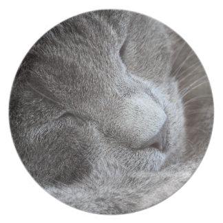 かわいい睡眠の子ネコのプレート プレート