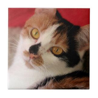 かわいい茶色のぶち猫 タイル