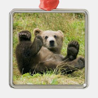 かわいい茶色の灰色グマの幼いこどもの美しい写真、ギフト メタルオーナメント