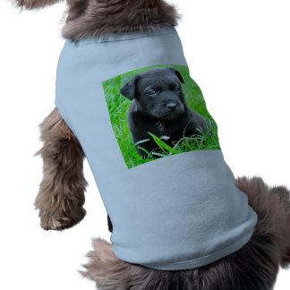 かわいい赤ん坊犬 ペット服
