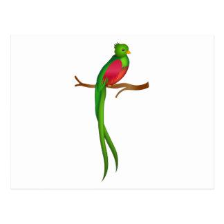 かわいい鳥のQuetzal ポストカード