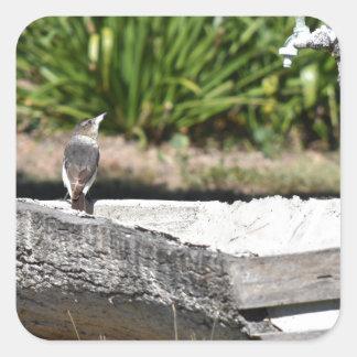 かわいい鳥田園クイーンズランドオーストラリア スクエアシール