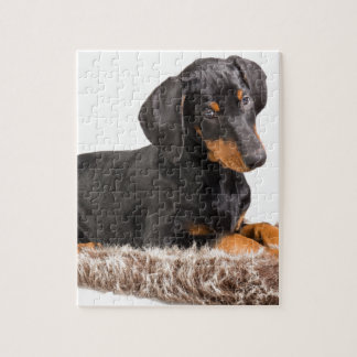かわいい(犬)ドーベルマン・ピンシェルの子犬 パズル