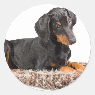 かわいい(犬)ドーベルマン・ピンシェルの子犬 ラウンドシール